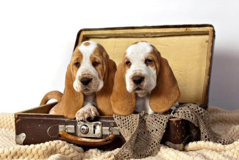 The best destinations for travelling with pets: dogs in suitcase