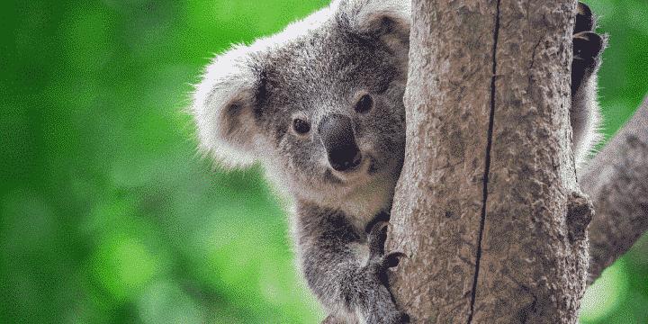 Australias-Bushfires-Animals-Affected-AllClear-Travel