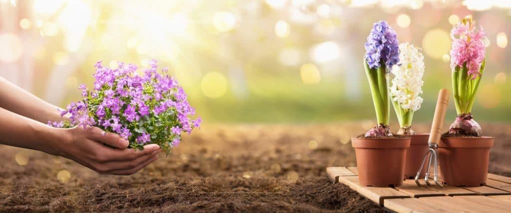 7 tips to help garden
