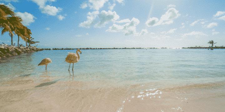 Best-Holiday-Destinations-2020-Aruba-AllClear-Travel