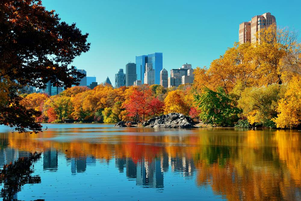 How an over 70's Couple with Cancer Attended Their Son's USA Wedding: Central Park Autumn and buildings reflection in midtown Manhattan New York City