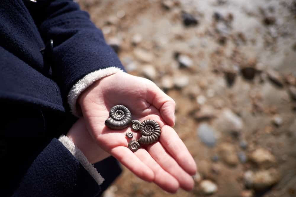 10 Family Activities for a Fun Summer: 195 million years old fossils found on the beach in Charmouth, Dorset