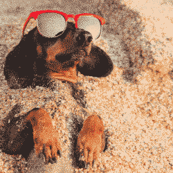 Enter Our Best Pet Photo Competition: Funny dog sunbathing on beach on holiday