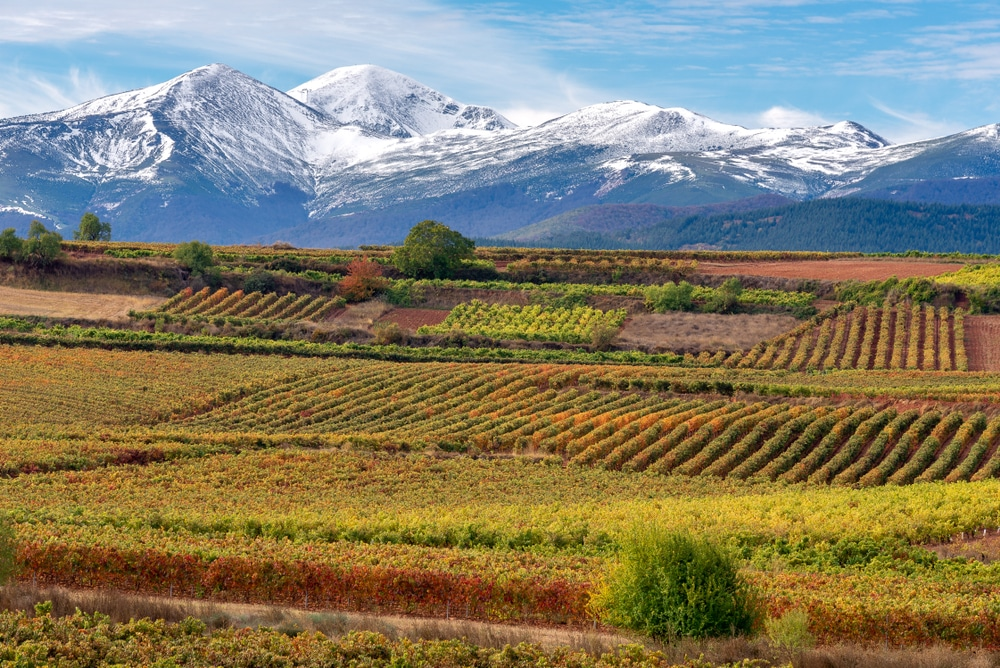 Top 5 wine tours in Europe: Vineyards with San Lorenzo mountain as background, La Rioja, Spain