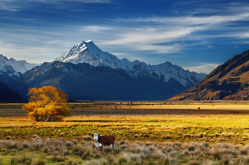 Unconventional travel ideas for all the family in 2019: Farmland next to Mount Cook, Canterbury, New Zealand