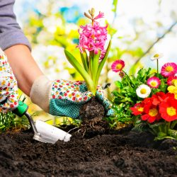 7 Tips to Make Your Garden Blossom this Summer: Woman planting a flower