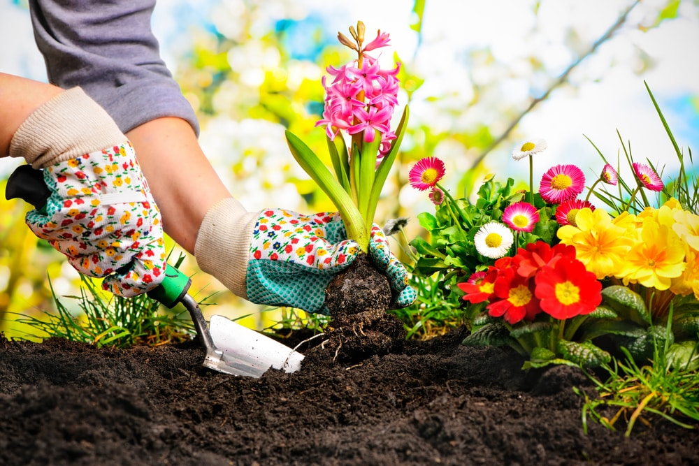 7 Tips to Help Your Garden Blossom this Summer: Woman planting a flower