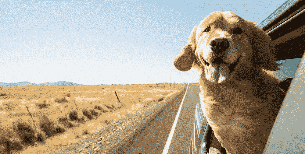 Travel the UK with your pets: Road trip with dog in the wind