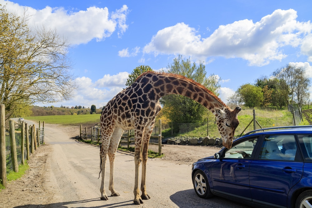 5 things to do with the grandchildren this Easter: West midlands safari
