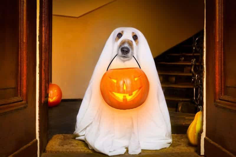 5 Spooky Destinations for a Halloween Holiday: ghost dog
