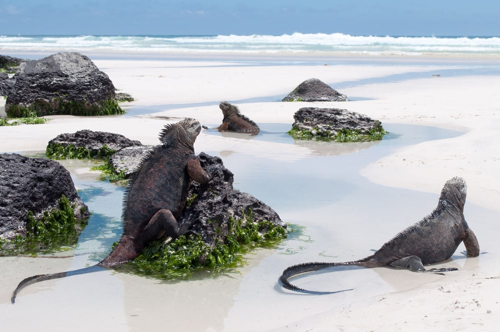 The 5 best ecotourism holidays for mature travellers: Galapagos Islands