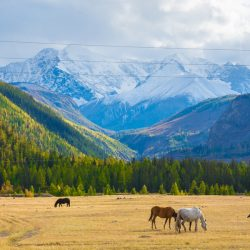 10 stunning places to visit in Russia during the World Cup: Altai Mountains, Russia