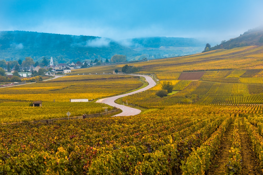Top 5 wine tours in Europe: Vineyards in the autumn season, Burgundy, France