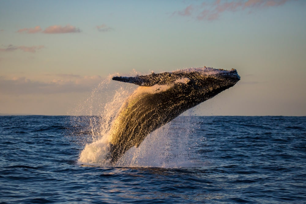 Unconventional travel ideas for all the family in 2019: Humpback whale bathing in Sydney Harbour, Australia